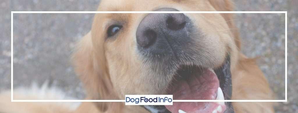 dog-food-info