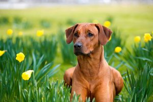 Dog looking healthy in the flowers
