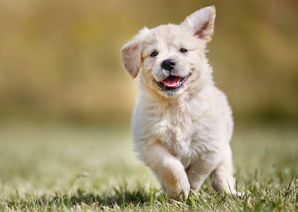 Brewers Yeast in Dog Food
