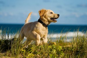 Brewers Yeast for a Dog