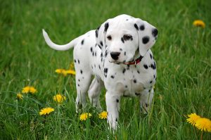 Larger Puppy Nutrition